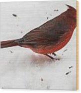 Snow Cardinal Wood Print