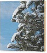 Snow-clad Pine Wood Print