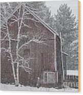Snow Covered Birch Tree And A Red Barn. Wood Print