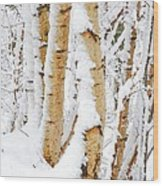 Snow Covered Birch Trees Wood Print