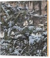Snow Covered Branches Wood Print by Brett Geyer