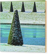 Snow Covered Garden Wood Print