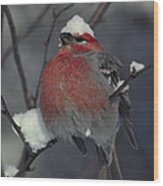Snow Covered Pine Grosbeak Wood Print