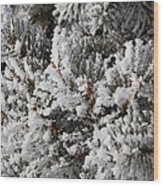Snow Covered Pine Tree Wood Print