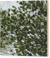 Snow Covered Pine Trees Wood Print