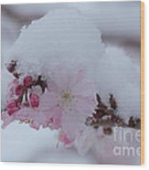 Snow Covered Pink Cherry Blossoms Wood Print