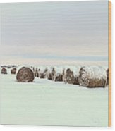 Snow Covered Round Bales Wood Print