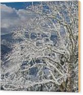 Snow Covered Tree And Winter Scene Wood Print