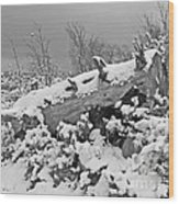 Snow Covered Tree Log In Black And White Wood Print