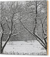 Snow Covered Trees In A Field. Wood Print