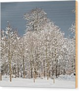 Snow Covered Trees In The Forest In Winter Wood Print by Matthias Hauser