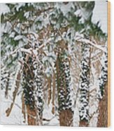 Snow Covered Trees Wood Print