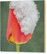 Snow Covered Tulip Wood Print