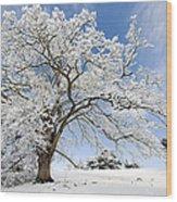 Snow Covered Winter Oak Tree Wood Print