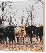Snow Cows II Wood Print
