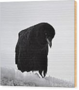 Snow Crow -edition  6 Of 10 Wood Print