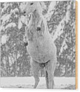 Snow Dancer Wood Print