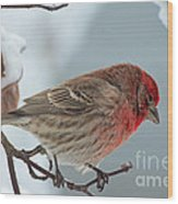 Snow Day Housefinch  Wood Print