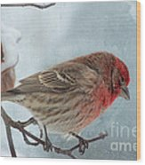 Snow Day Housefinch With Texture Wood Print