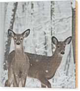 Snow Deer Wood Print