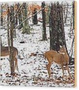 Snow Doe's 1 Wood Print