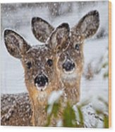 Snow Does Wood Print