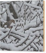 Snow Dove Wood Print
