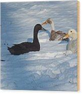 Snow Ducks Wood Print