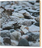 Snow Dusted Wood Print