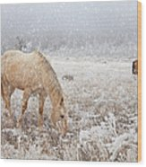 Snow Falling On Horses Wood Print