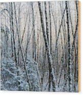 Snow Falls On The Alders  Astoria Wood Print