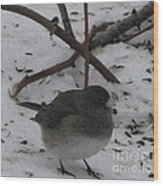 Snow Finch Wood Print