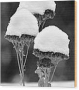 Snow Flowers Bw Wood Print