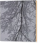Snow Frosted Branches Wood Print
