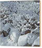 Snow Frosted Bush Wood Print