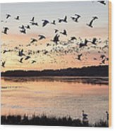 Snow Geese At Chincoteague Last Flight Of The Day Wood Print