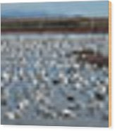 Snow Geese Bosque Wood Print