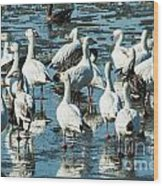 Snow Geese Discussion Wood Print