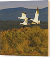 Snow Geese Flying In Fall Wood Print