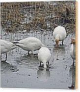 Snow Geese Muddy Waters Wood Print