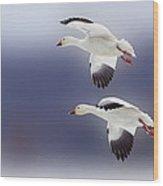Snow Goose Flight Wood Print by Bill Tiepelman