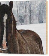Snow Horse Wood Print
