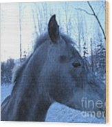 Snow Horse Whisperer  Wood Print