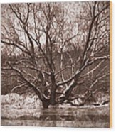 Snow Imp 1 - Tree Covered With Snow January 2014 Wood Print