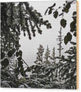 Snow In Trees At Narada Falls II Wood Print