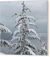Snow Laden Tree Wood Print