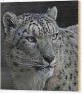 Snow Leopard 15 Wood Print