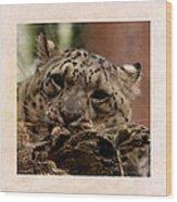 Snow Leopard 17 Wood Print