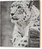 Snow Leopard 2 Wood Print
