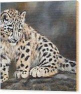 Snow Leopard Cub Wood Print